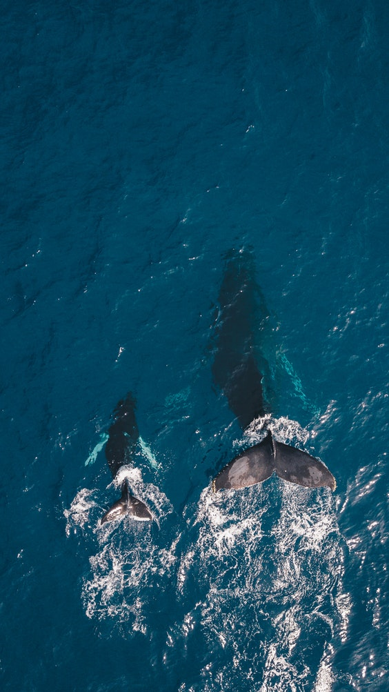 Ocean giants: How to spot Whales, Turtles and Dolphins in Sri Lanka